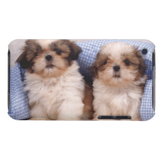 Shih Tzu puppies under a checked blanket Barely There iPod Case