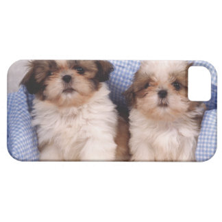 Shih Tzu puppies under a checked blanket Case For The iPhone 5