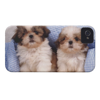 Shih Tzu puppies under a checked blanket iPhone 4 Case