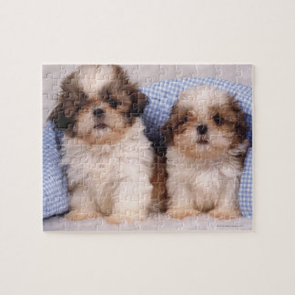 Shih Tzu puppies under a checked blanket Jigsaw Puzzle