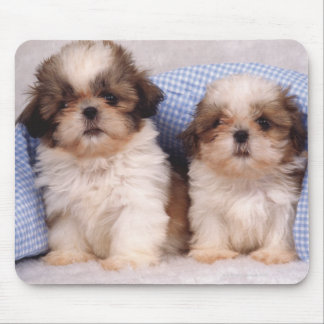 Shih Tzu puppies under a checked blanket Mouse Pad