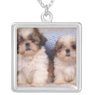 Shih Tzu puppies under a checked blanket Silver Plated Necklace