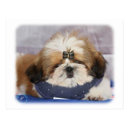 Shih Tzu puppy 9Y506D-041 Postcard