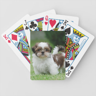 Shih tzu puppy bicycle playing cards