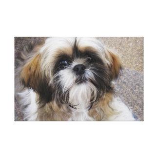 Shih Tzu Puppy Canvas Print