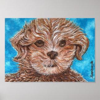 Shih Tzu Puppy Dog Print
