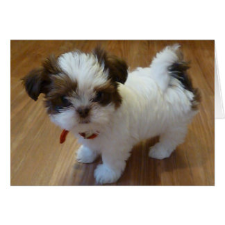 Shih Tzu Puppy Notecards Card