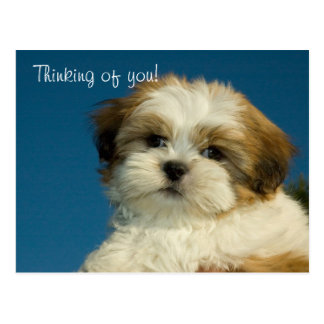 "Shih Tzu Puppy ""Thinking of you"" PostCard"