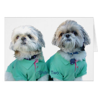 Shih Tzu -Shih Two Greeting Card