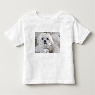 Shih Tzu T-shirts