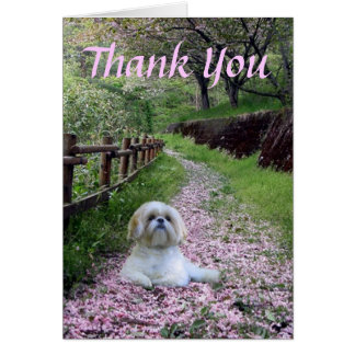 Shih Tzu Thank You Card