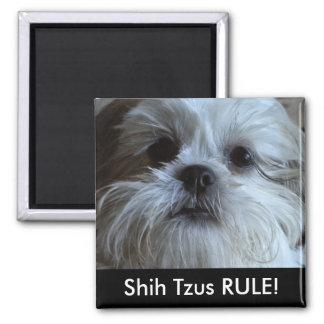 Shih Tzus RULE Refrigerator Magnet