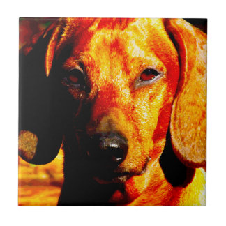 Shimmering Glowing Dachshund Face Closeup Tiles