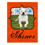 Shiner - Boxer Postcard