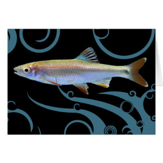 Shiner Fish with Dramatic Swirls Greeting Card