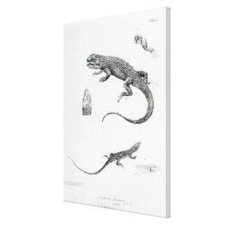 Shingled Iguana Canvas Print