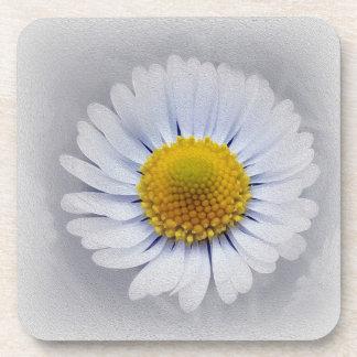shining white daisy beverage coasters