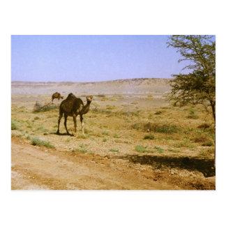 Ship of the Desert Postcard