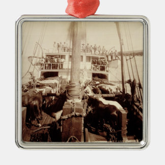 Shipping Cattle on the 'W.G. Hall', Hawaii, 1890s Christmas Ornament