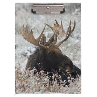 Shiras Bull Moose 2 Clipboard