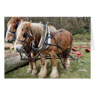 Shire Horses Card