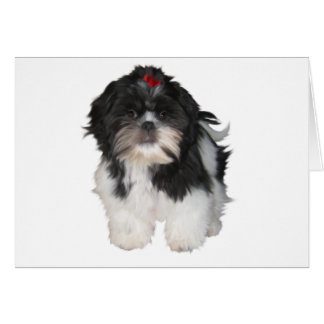 Shitzu Shih Tzu Puppy Dogs Greeting Card