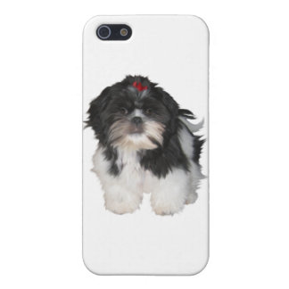 Shitzu Shih Tzu Puppy Dogs Case For iPhone 5/5S