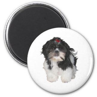 Shitzu Shih Tzu Puppy Dogs Magnet