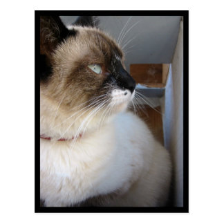 Shiva the Snowshoe Post Card