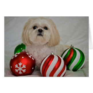 Shiz Tzu with christmas decoration Card