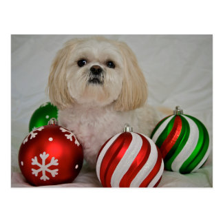 Shiz Tzu with christmas decoration Postcard
