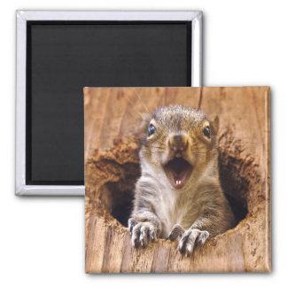 Shocked Squirrel Magnet