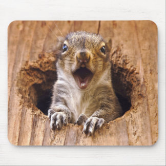 Shocked Squirrel Mouse Mat
