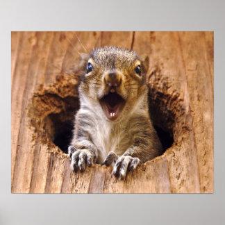 Shocked Squirrel Poster
