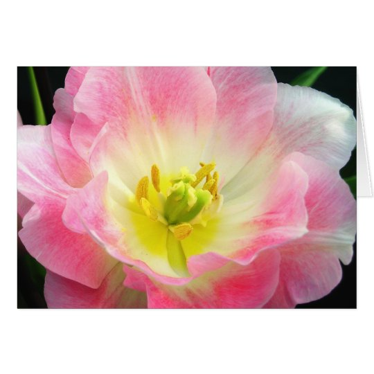 Shocking Pink Petals Card