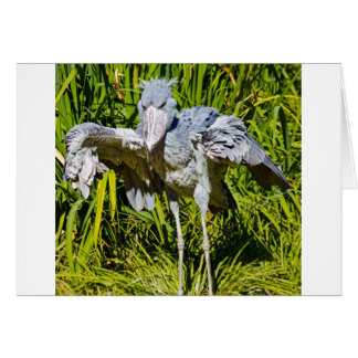Shoebill Stork Card