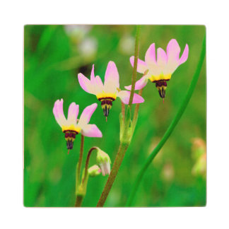 Shooting Star Wildflowers in Mission Trails Park Wood Coaster
