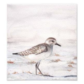 Shore Bird Art Reproduction Photo Print