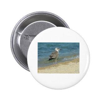 Shore bird 6 cm round badge