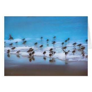 Shore Birds Greeting Cards