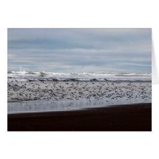Shore Birds Flying at Ocean Shores, WA Greeting Card