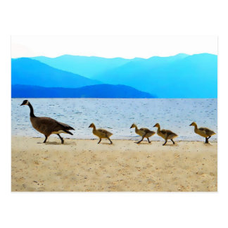 Shore Patrol Canada Geese Post Cards