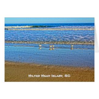 Shorebirds In The Surf! Hilton Head Island SC Card