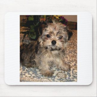 Shorkie Puppy Mouse Mat