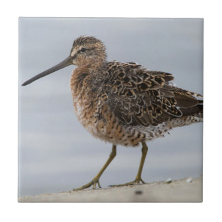 Short-billed Dowitcher Tile