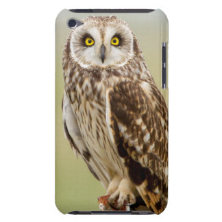Short Eared Owl At Ninepipe Wma Near Ronan Case-Mate iPod Touch Case