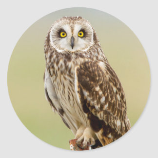 Short Eared Owl At Ninepipe Wma Near Ronan Classic Round Sticker