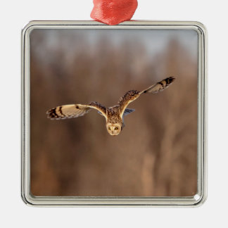 Short-eared owl diving towards the ground christmas ornament