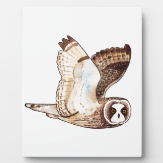 Short eared owl flying by plaque