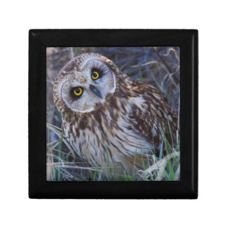Short-eared Owl Gift Box